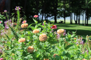 summer garden, road trip