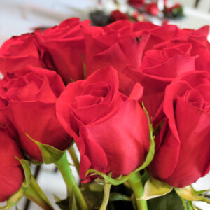 Red roses Midlife Snowbird